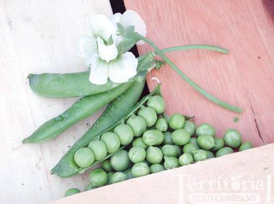 Dakota Peas