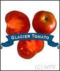 Organic Glacier Tomato