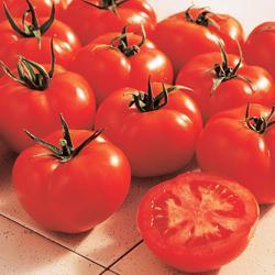 Tomato Ferline F1 Hybrid (Cordon)