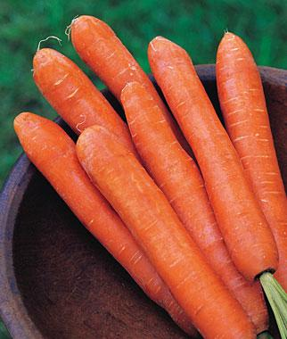 Carrot, Nantes Half Long