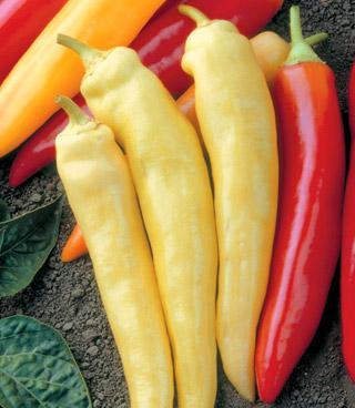 Pepper Sweet Spot Hybrid X3R