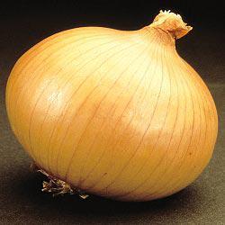 Savannah Sweet Hybrid Onion