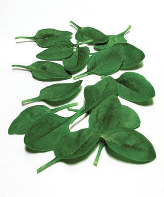 Tortoiseshell Spinach