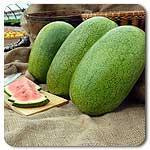 Organic Ali Baba Watermelon