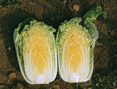 Orange Mini Chinese Cabbage