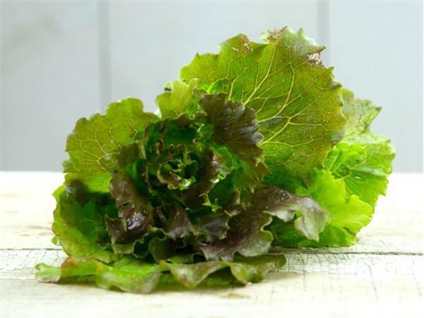 Rouge Grenobloise Lettuce
