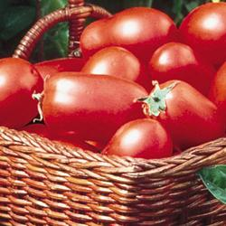 Roma Heirloom Tomato
