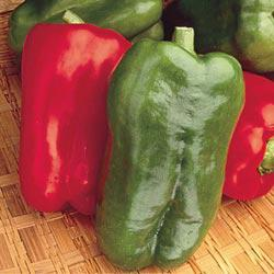 Big Bertha P.S. Hybrid Sweet Pepper