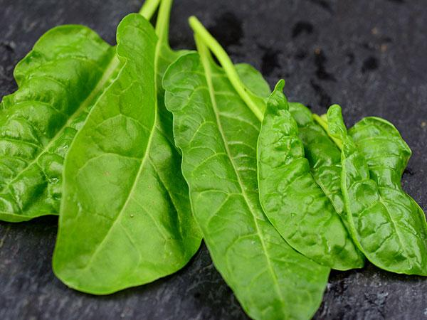 Perpetual Spinach Chard