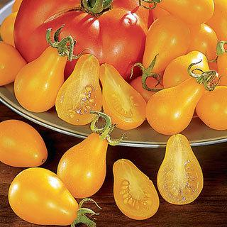 Grafted Tomato Yellow Pear
