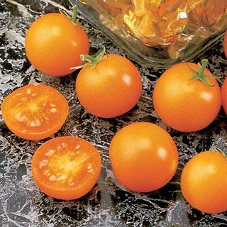 Tomato Sunsugar Hybrid