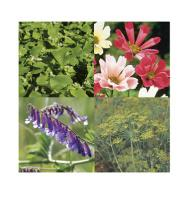 Beneficial Insect Attractant Mix