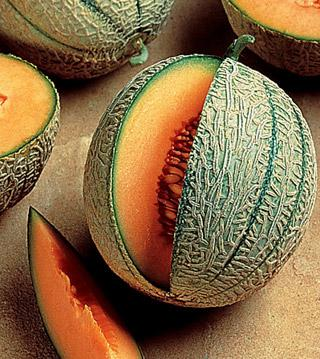 Melon French Orange Hybrid