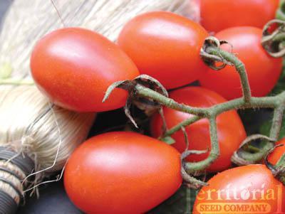 Cabernet Tomato