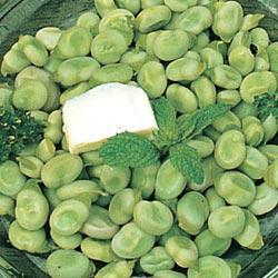 Fava/Broad Bean Express