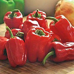 Cajun Belle Hybrid Sweet Pepper