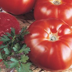 Tomato Super Marmande (Semi- Deteminate)