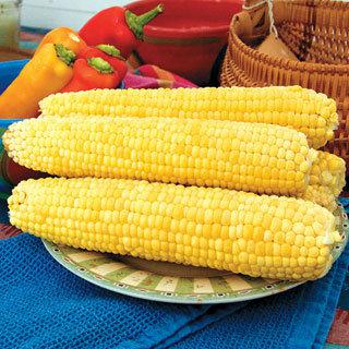 Corn Mirai Yellow 148Y