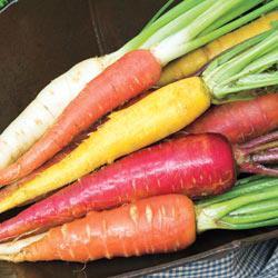 Rainbow Blend Carrots