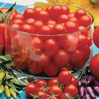 Sweet Baby Girl Hybrid Tomato Plant