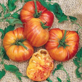 Big Rainbow Tomato Annual Plant
