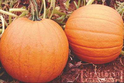 Howden Pumpkin Conventional & Organic
