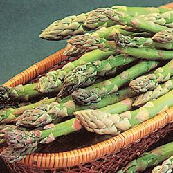 Asparagus Mary Washington Improved
