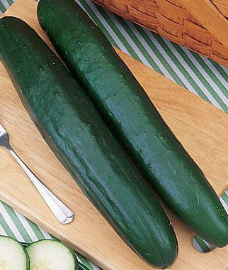 Cucumber, Big Burpless Hybrid