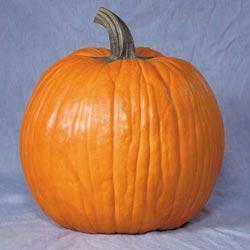 Howden's Field Pumpkin