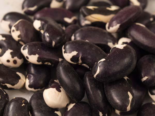 Appaloosa Bean