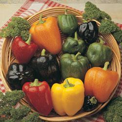 Sweet Pepper Summer Salad F1 Hybrid