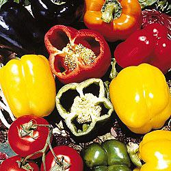 Sweet Bell Pepper Hybrid Mix