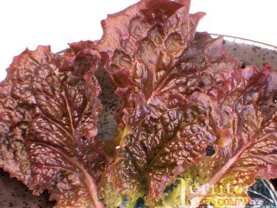 Red Velvet Lettuce Organic