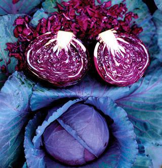 Cabbage Cairo Hybrid