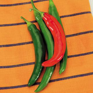 Pepper Garden Salsa Hybrid