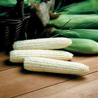 Corn Avalon Triplesweet™ Hybrid
