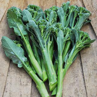 Broccoli Apollo Hybrid