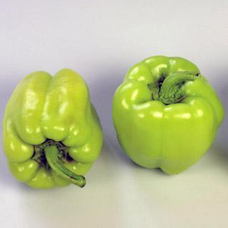 Pepper Pompeii Hybrid