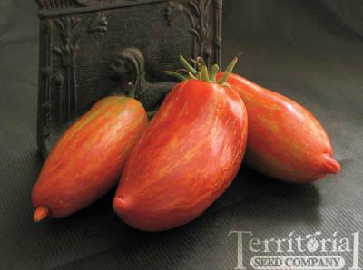 Striped Roman Tomato Organic