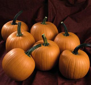 Pumpkin Hijinks Hybrid