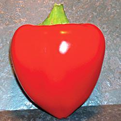 Sweetheart Hybrid Sweet Pepper