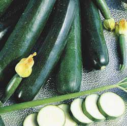 Black Magic Zucchini Summer Squash