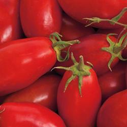 San Marzano Heirloom Tomato
