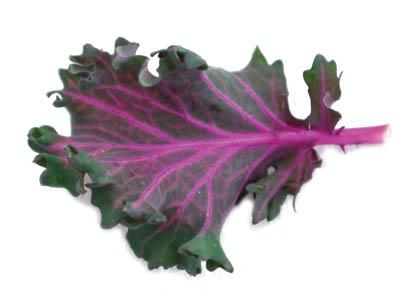 Red Chidori Kale