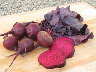 Bull's Blood Beet Organic