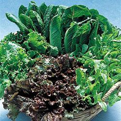 Henry Field's® Blend Leaf Lettuce
