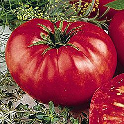 Beefsteak (VF) Tomato