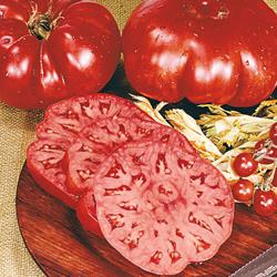 Arkansas Traveler Heirloom Tomato