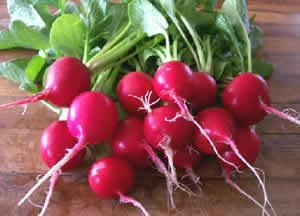 Radish, Cherry Belle, Organic