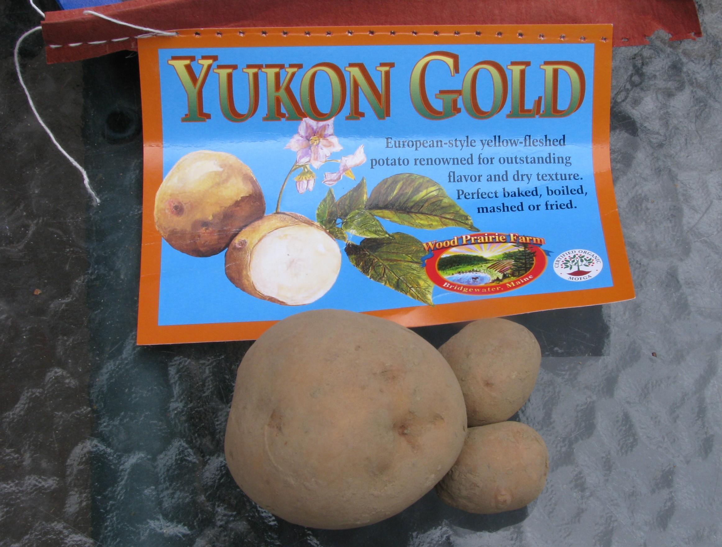 Certified Yukon Gold Seed Potato